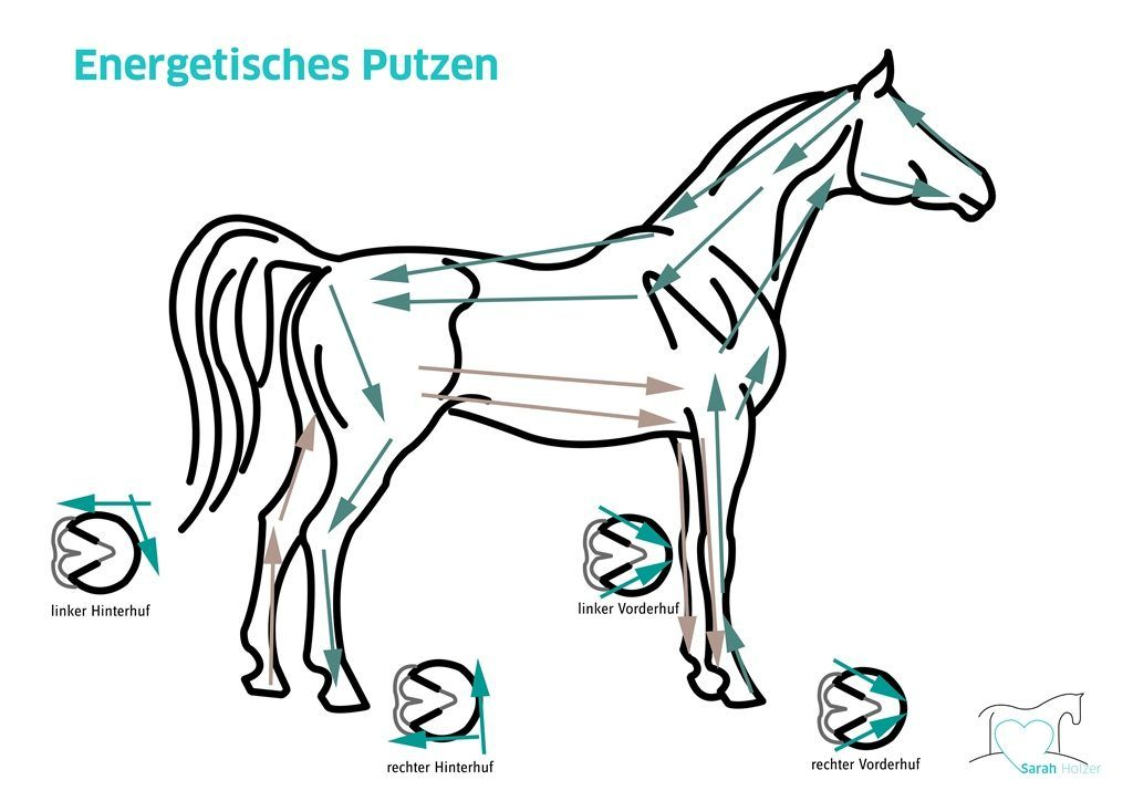 Wirbelsäule-Pferd | EQUINE HACKS | Pinterest | Wirbelsäule, Pferde ...