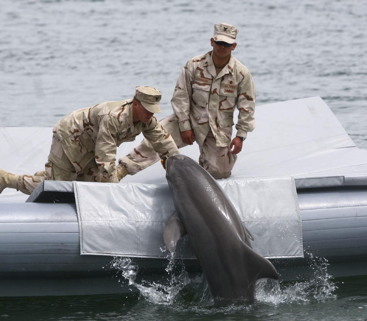 Military Dolphins Military Dolphins And Sea Lions Star At
