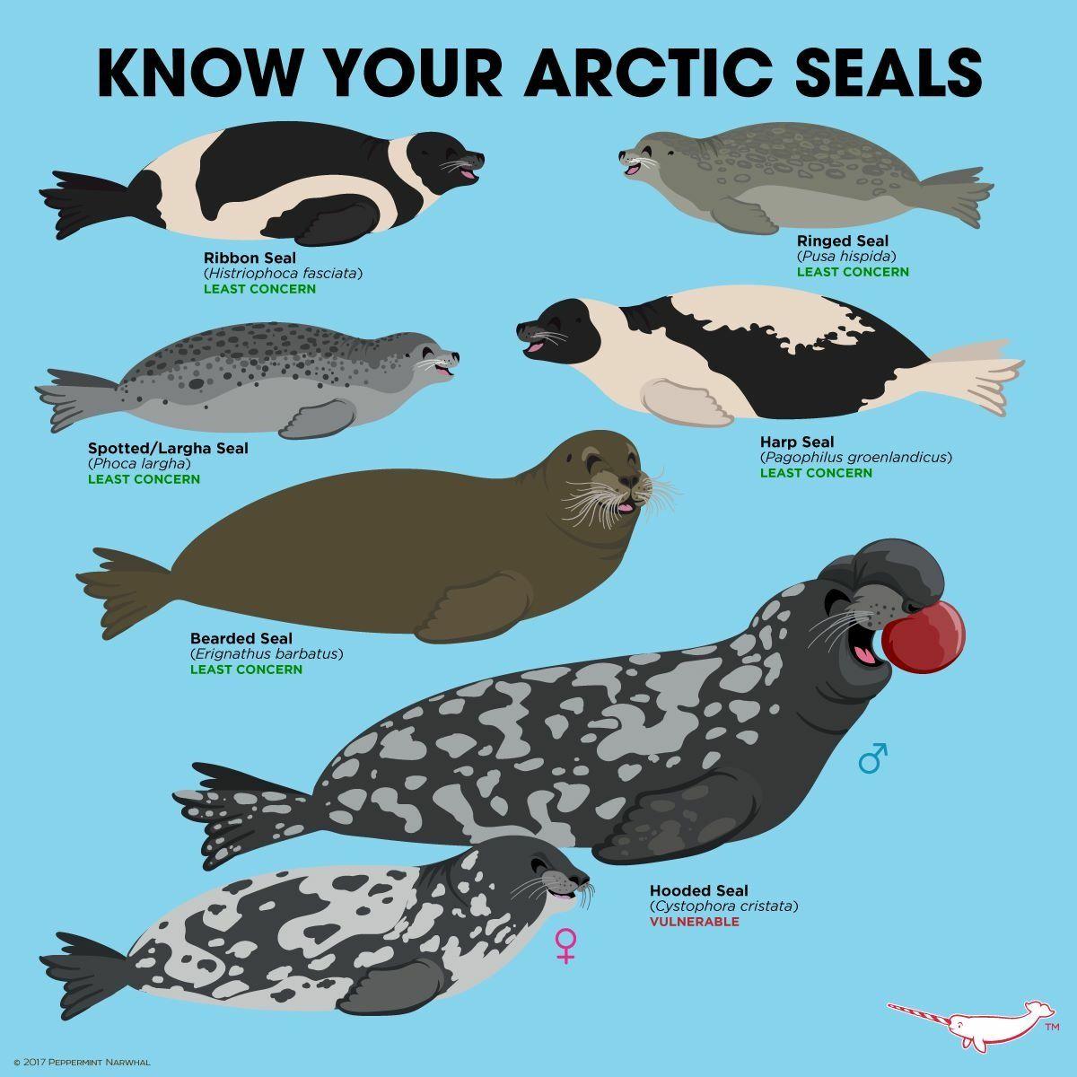 Pin by Kalynn Petty on animals Arctic animals, Marine