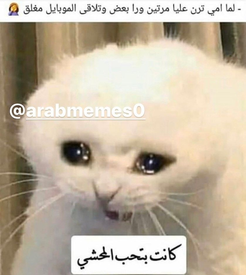 Pin By Reem A Alshaffaiy On Memes In 2020 Funny Photo Memes Funny Joke Quote Fun Quotes Funny