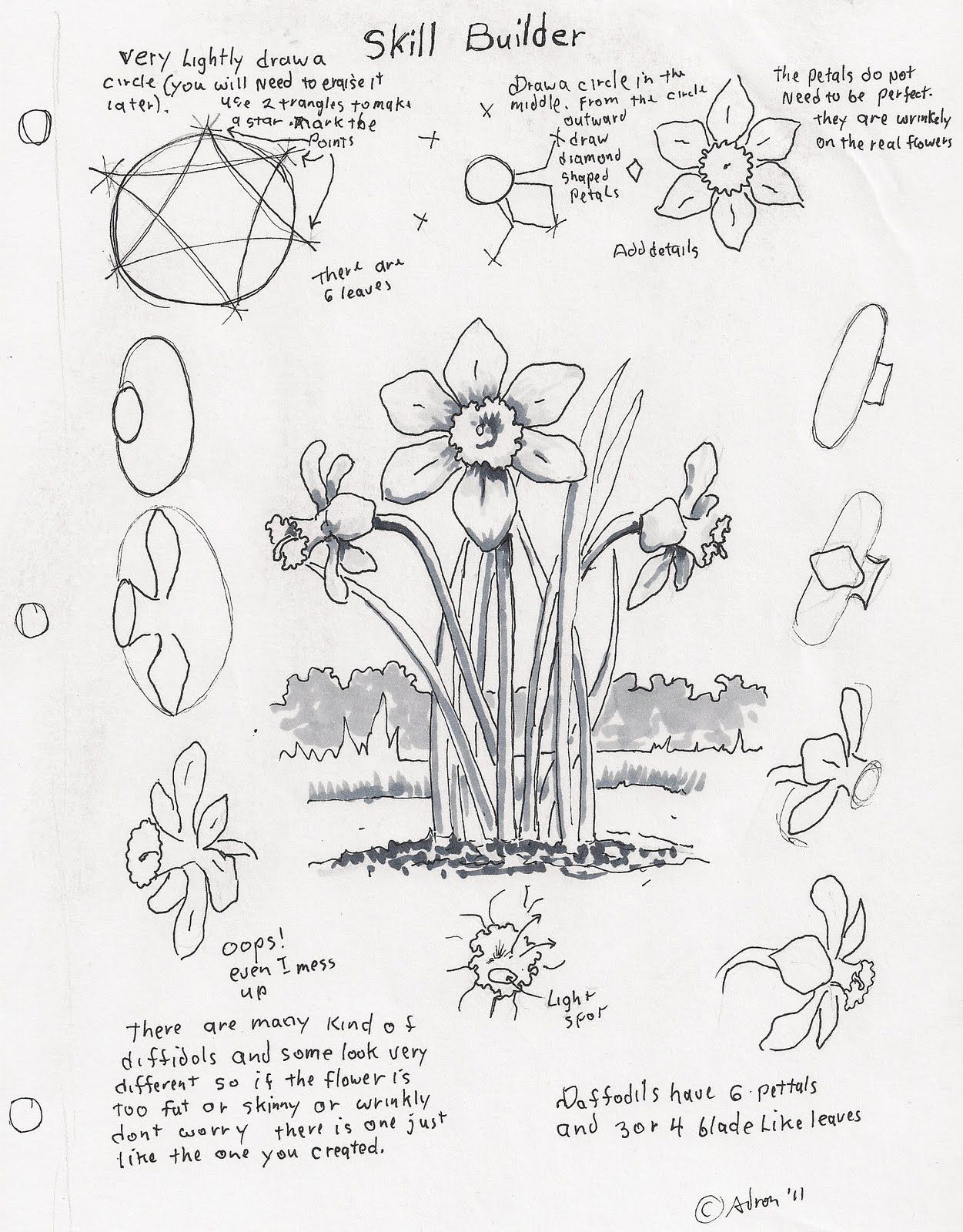 Adron's Art Lesson Plans: How To Draw A Daffodil, A Skill Builder For The