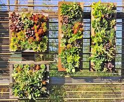 Wall Mounted Succulent Garden   Google Search