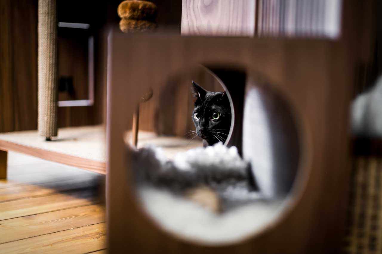 Modern Cat House Gives Cats 10 Fun Things Design Milk In 2020 Design Milk Happy Design Cat Flats
