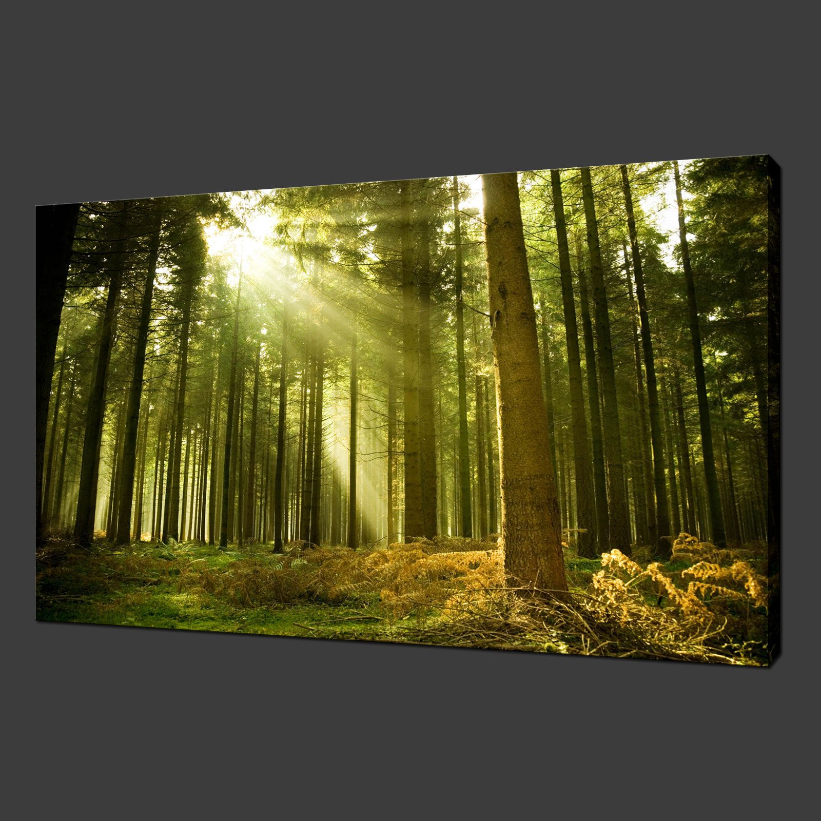 GREEN FOREST RAYS PREMIUM CANVAS PRINT WALL ART MODERN DESIGN FREE ...