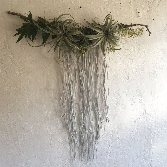 JOSHUA TREE Airplant and Moss Wall Hanging by AURORABOTANICA