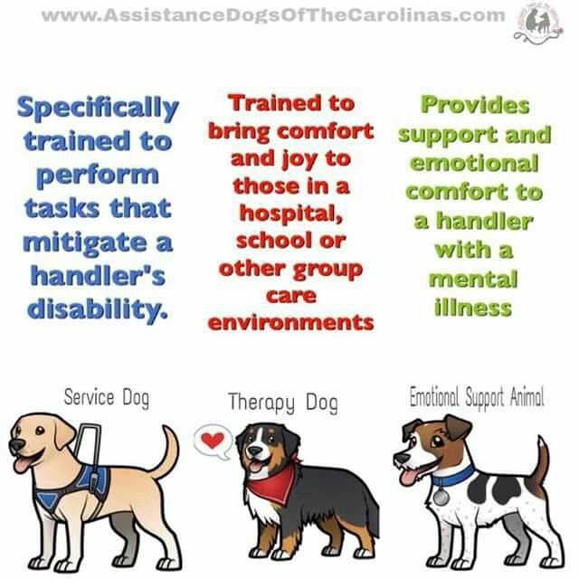 Types Of Service Animals Service Dogs Emotional Support Dog