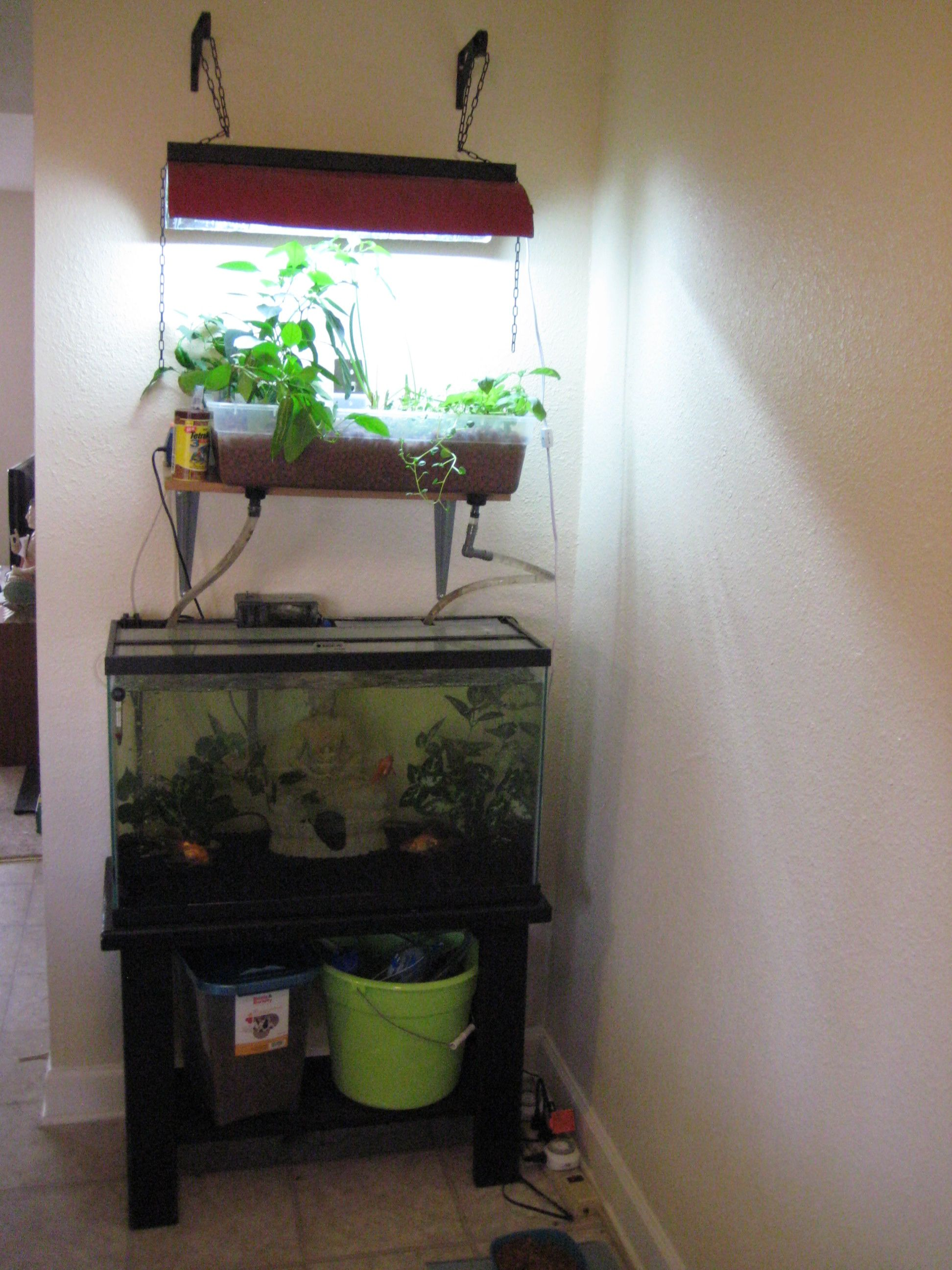 Diy aquaponics fish tank google search aquaponics for Fish tank hydroponic garden