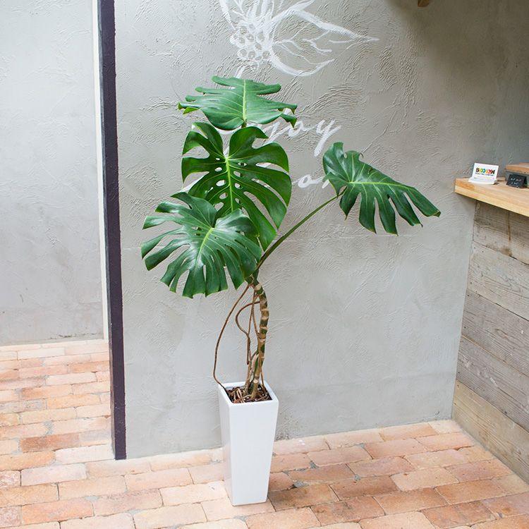 Flower おしゃれまとめの人気アイデア Pinterest Masami Mimuro 植物の装飾 室内 観葉植物 鉢植え