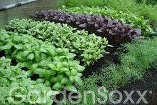What Can I Grow? - GardenSoxx - The Best Container for Growing Healthier Fruits, Vegetables, Herbs and Flowers