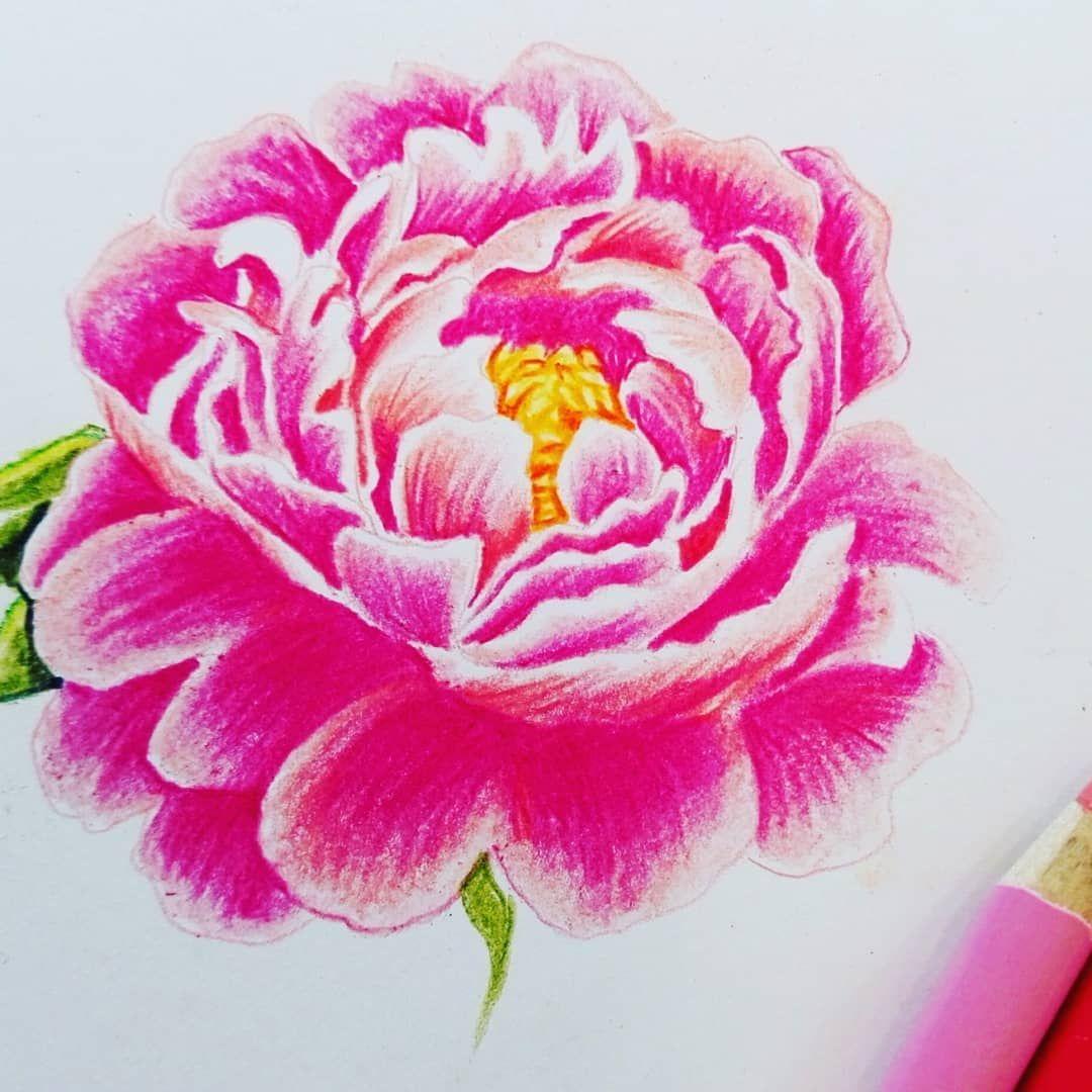 Schone Pfingsten Und Tolle Feiertage Meine Lieben Pfingstrosen Peony Denizeichnet G Blumen Zeichnen Blumen Malen Pfingstrosen