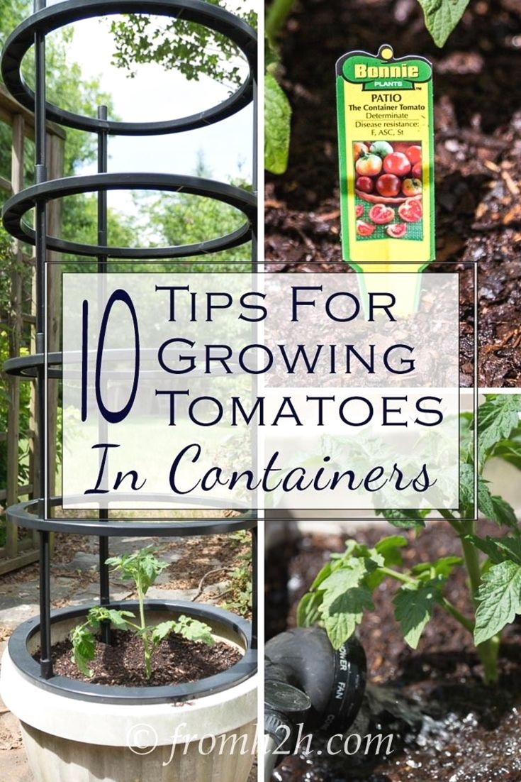 home gardening tips india #gardeningtips | Gardening Tips ... on home business tips, home projects, home security tips, photography tips, home decor tips, landscaping tips, home recycling tips, home remodeling tips, real estate tips, container gardening, home design tips, home fitness, parenting tips, gardening guides, home garden tips, home diy tips, home cleaning tips, home exercise tips, flower gardening, herb gardening, home safety tips, vertical gardening, organic gardening, home beauty tips, home sports, home theater tips,