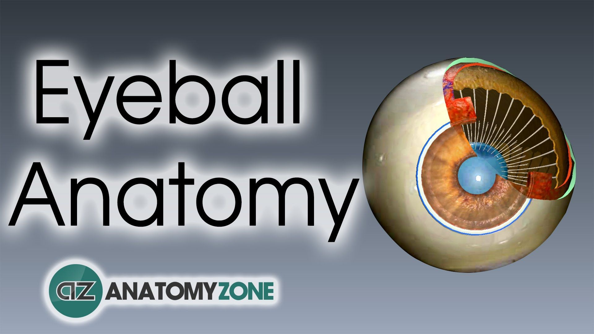 Eyeball anatomy - third video in eye anatomy series. Check out the ...