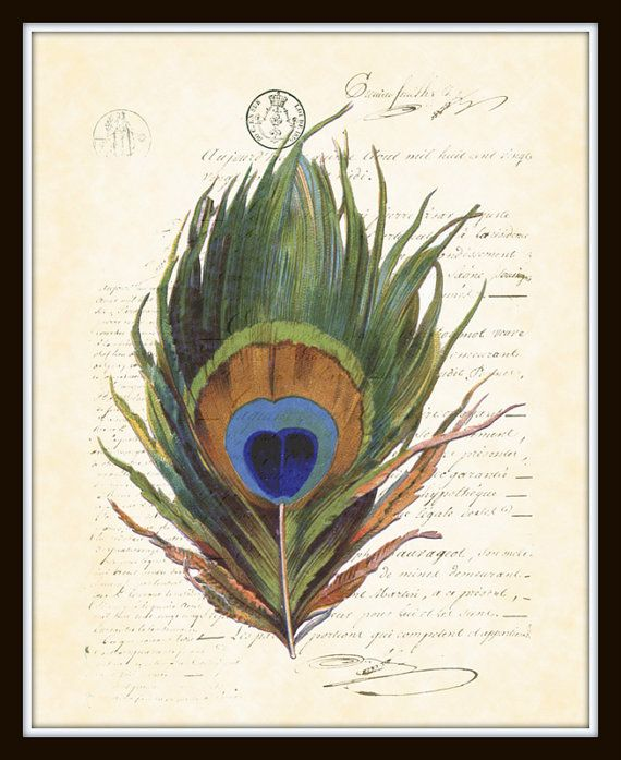 Captivating Antique French Peacock Feather Collage On French Ephemera Art Print 8 X 10 Home  Decor.