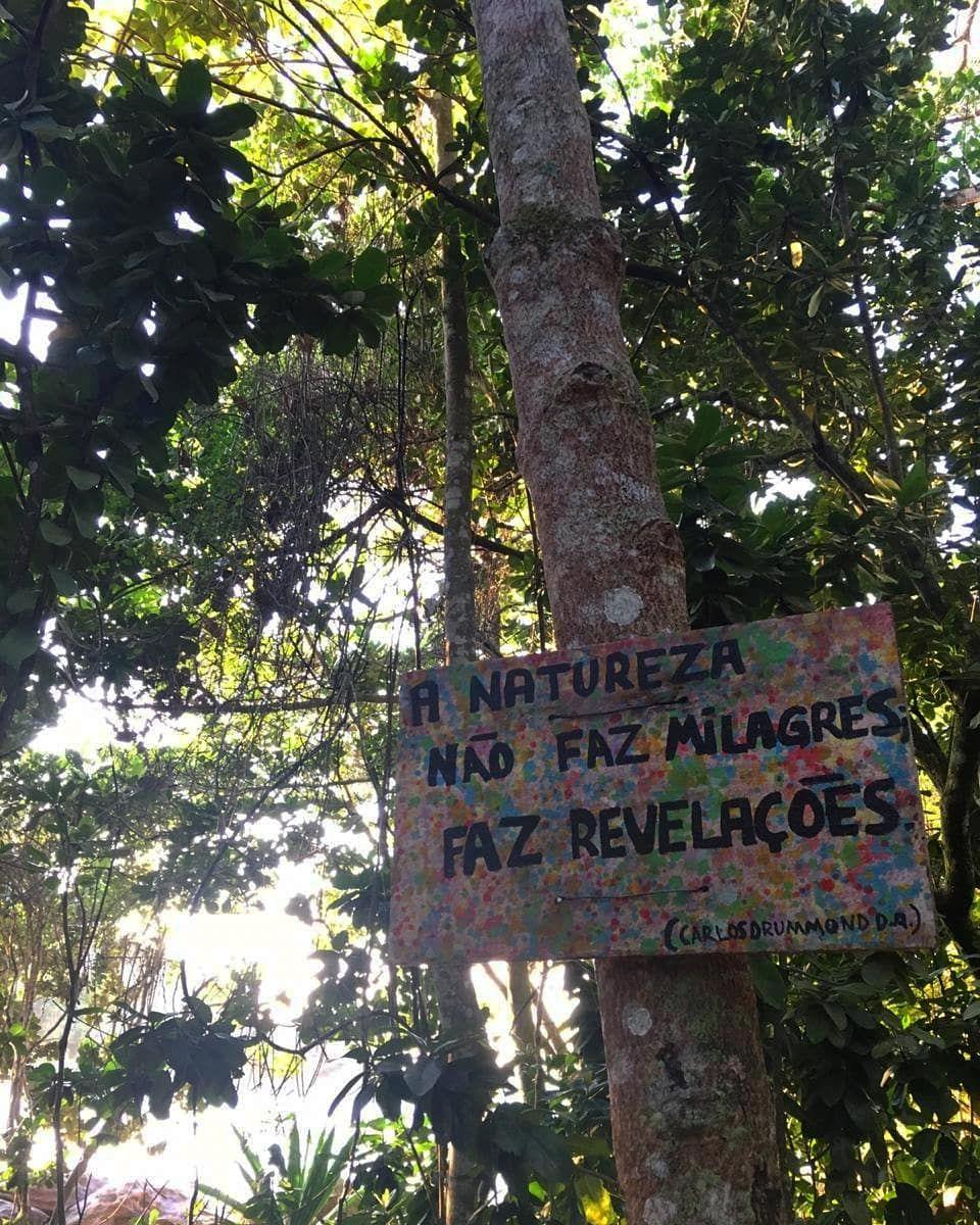 Trilha Riodejaneiro Arvores Natureza Maravilhas Simples