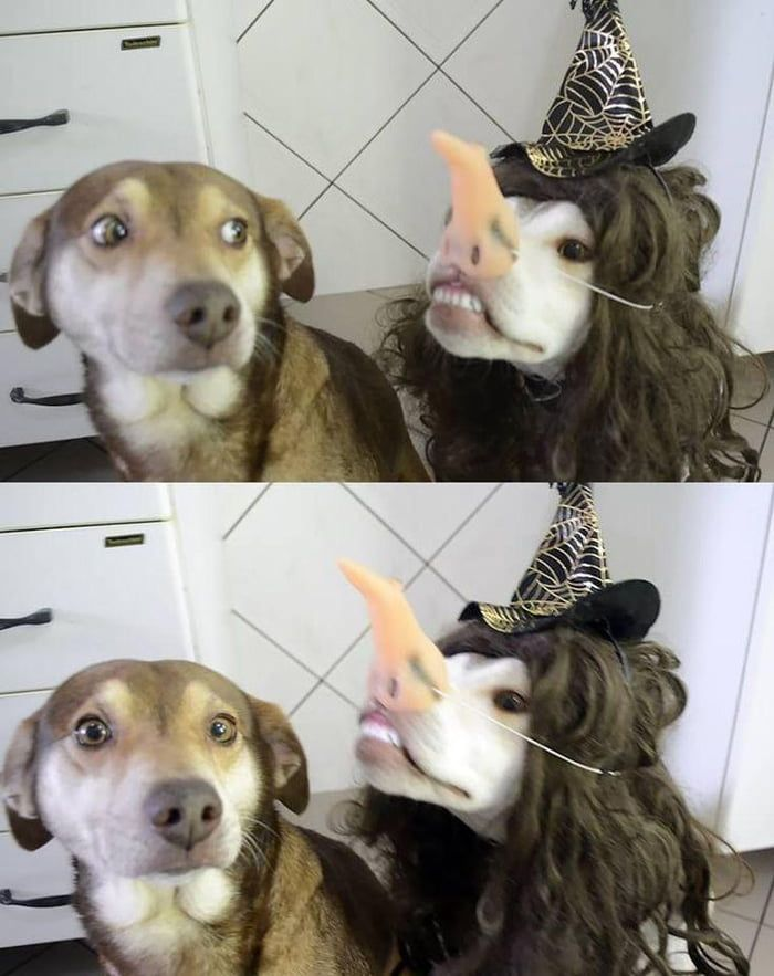 Best Funny Animals Doggos ready for Halloween Doggos ready for Halloween 1