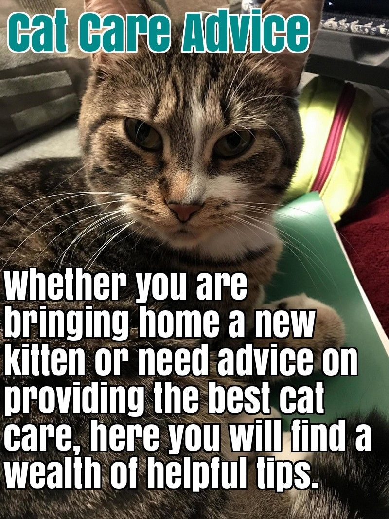 Tips To Lure A Cat Back Home Pet Fbi In 2020 Lost Cat Cats Pets