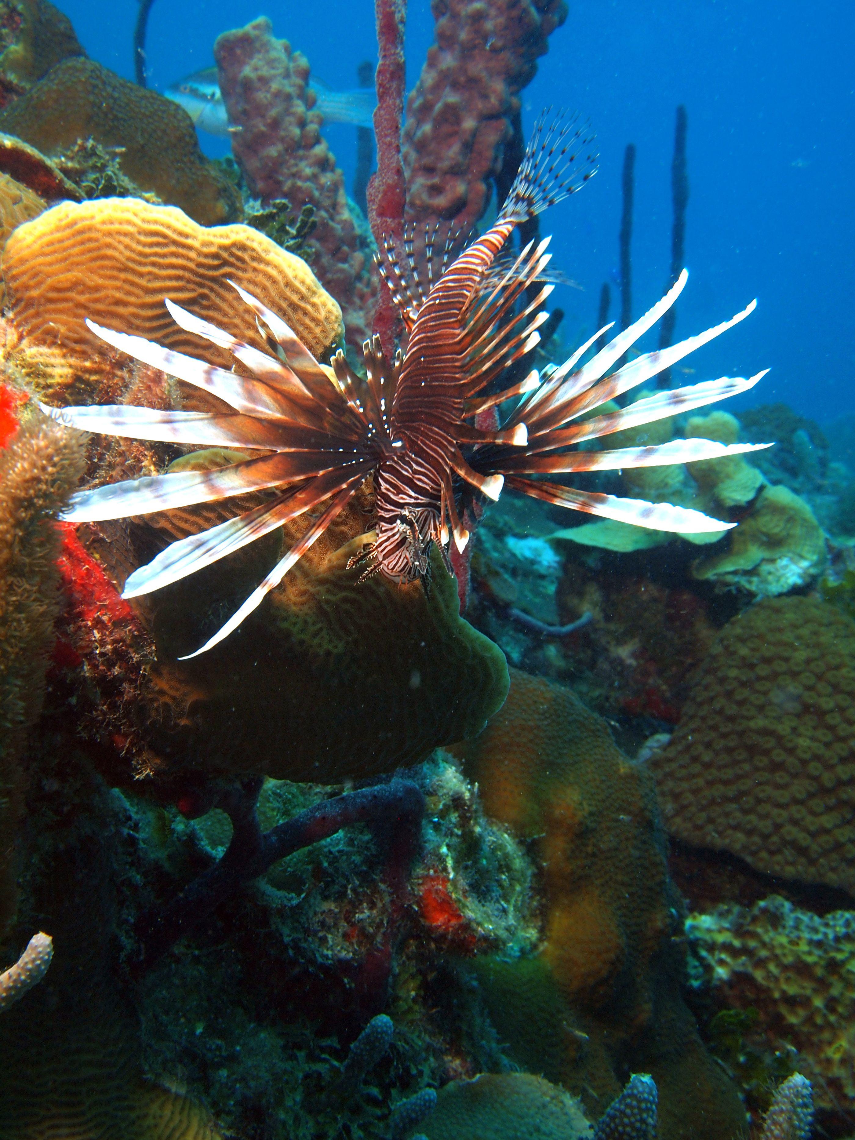 Fish tank kings a snorkelers dream - Fish