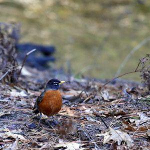 Yosemite! Nice bird - even if i don't know the name of it :-) http://meriharakka.net/2015/02/22/yosemite/