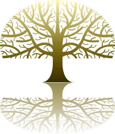 Family Tree: | Life Hacks | Family tree search, Family