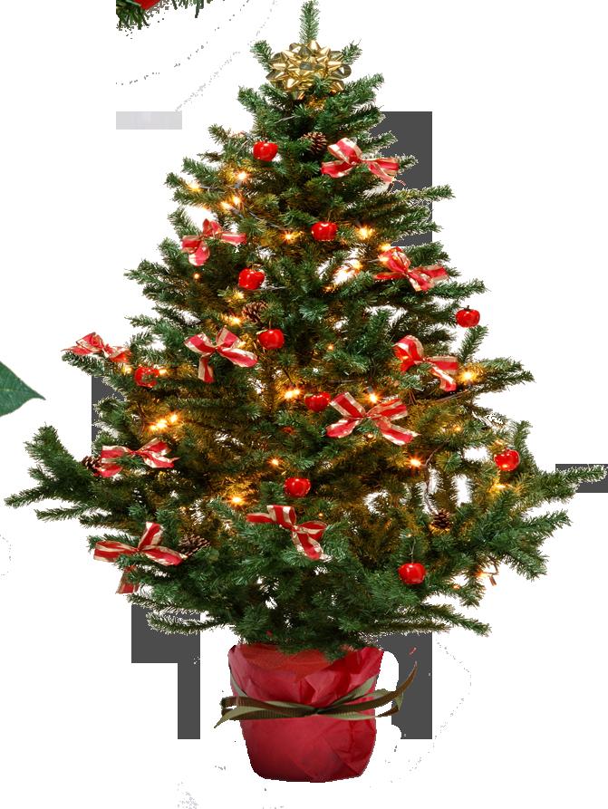 Christmas Tree Png Image Christmas Tree Christmas Merry Christmas
