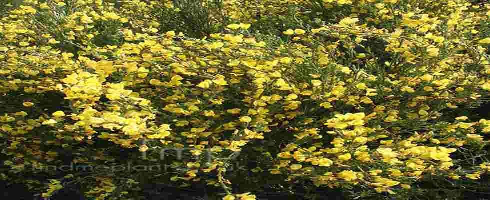 Tipos de arbustos Jardines pequeños Pinterest