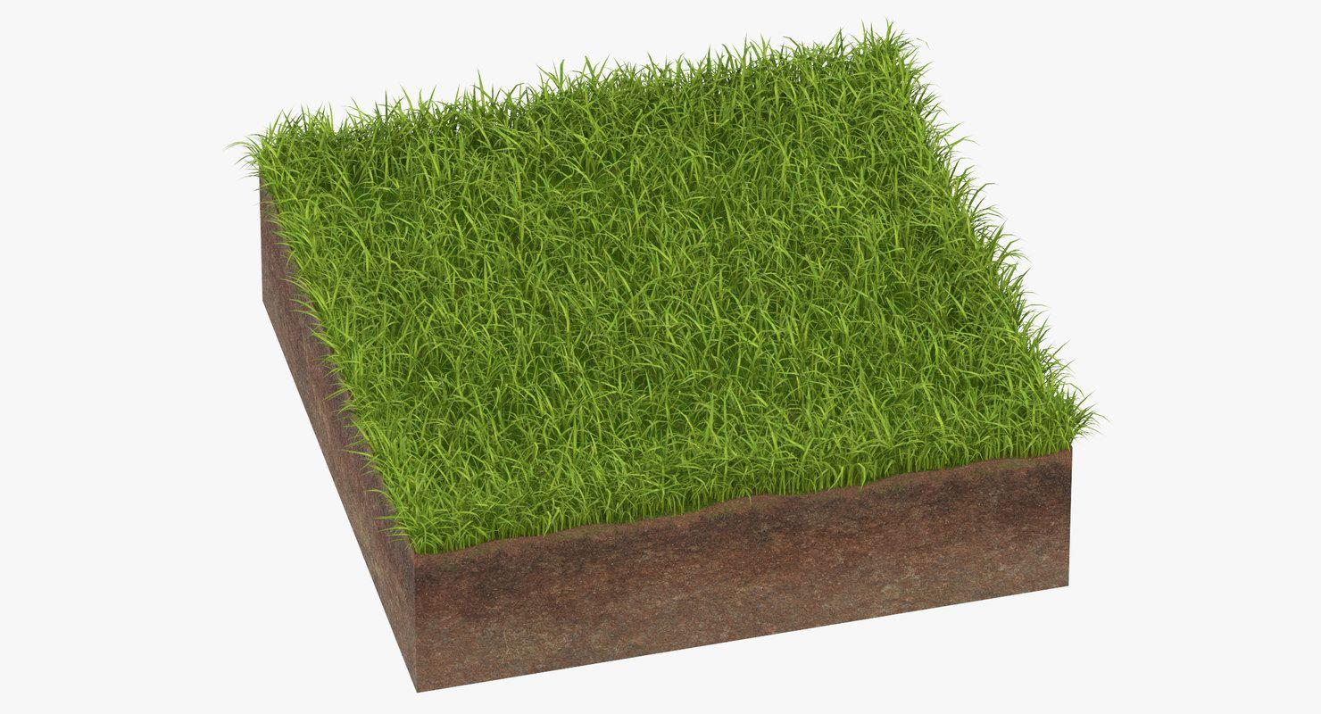 3d Model Grass Cross Section 01 3d Model Model Grass