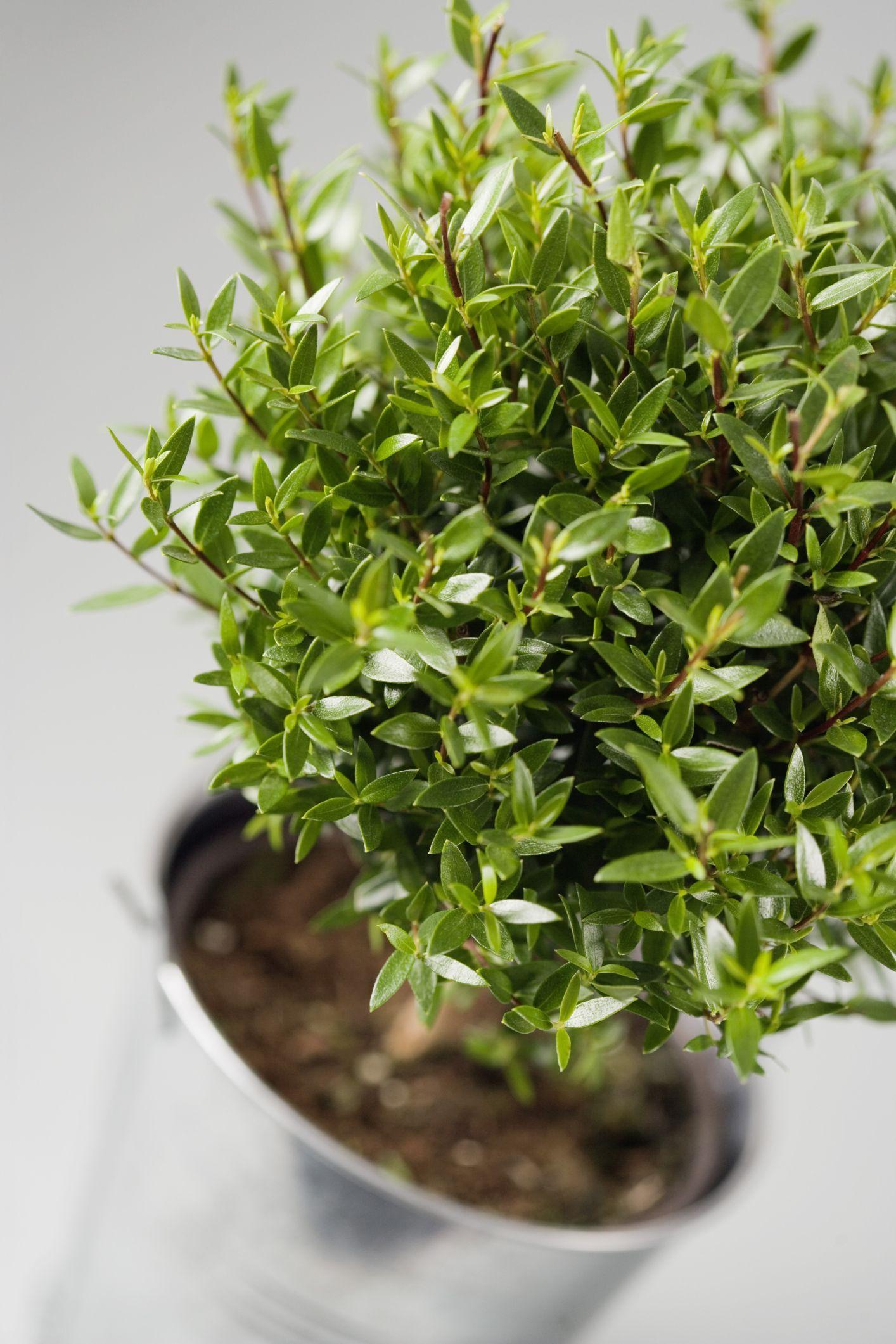 How To Get Rid Of Little Black Flies In Plant Soil Ehow Com In 2020 Fruit Flies Fruit Flies In House Plants