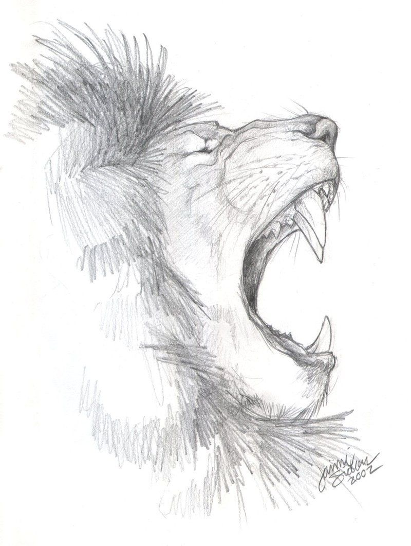 An African Lion Side Profile Dessin Lion Dessin Profil