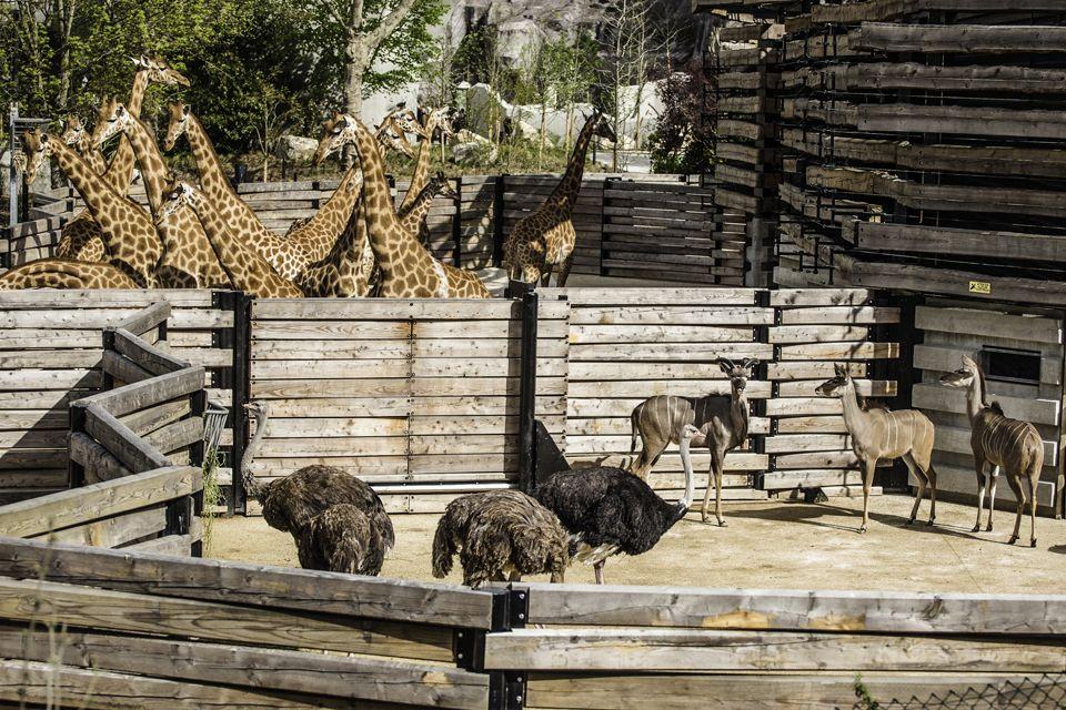 Parc Zoologique De Paris | Bernard Tschumi Architects
