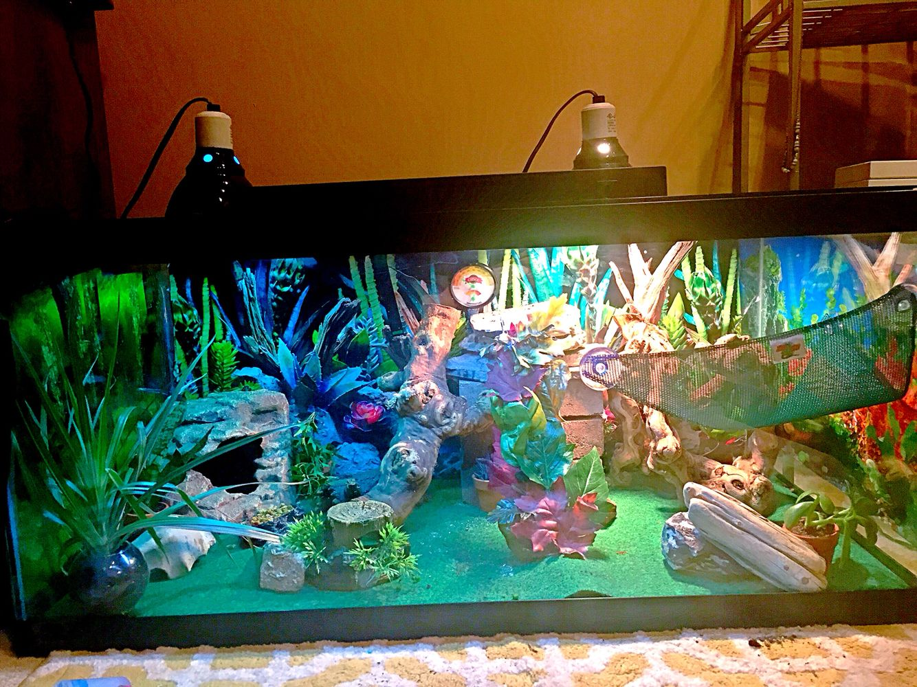 An Intricate Mini Desert Playground In A 40 Gallon Tank