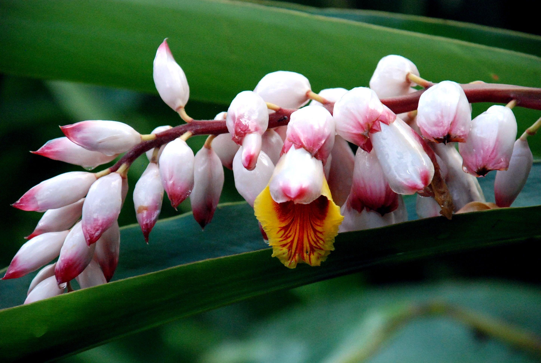 Orquidiario De Soroa Cuba Orchidee Et Fleurs