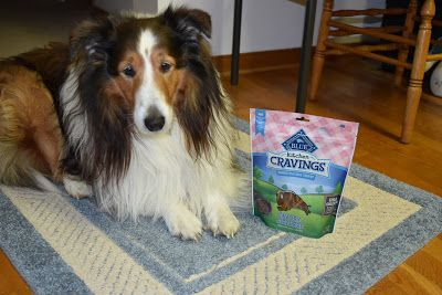 Kitchen Time is Food Time - Even if your dog thinks being in the kitchen means getting a treat, you can still treat them to a healthy snack! Try Blue Buffalo Dog Treats!