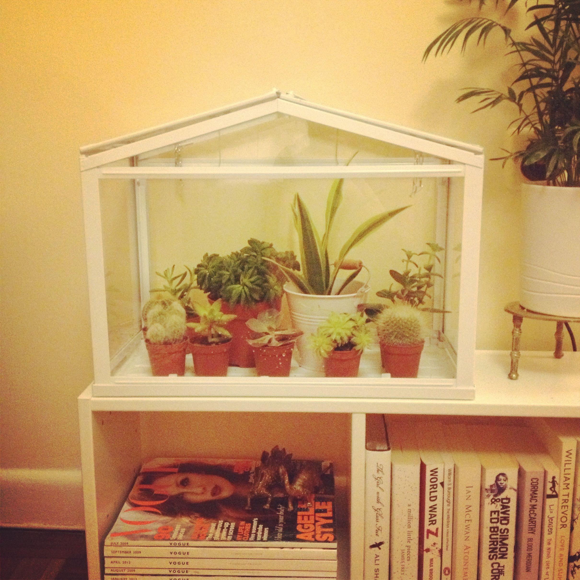 my new mini greenhouse from ikea garden pinterest. Black Bedroom Furniture Sets. Home Design Ideas