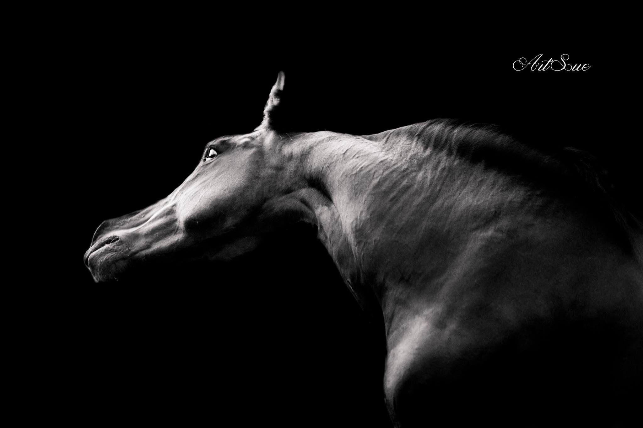 Barquero Horses, Animals
