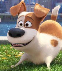 Pin By Kim Riley On Bulletin Boards Secret Life Of Pets Pets Movie Secret Life