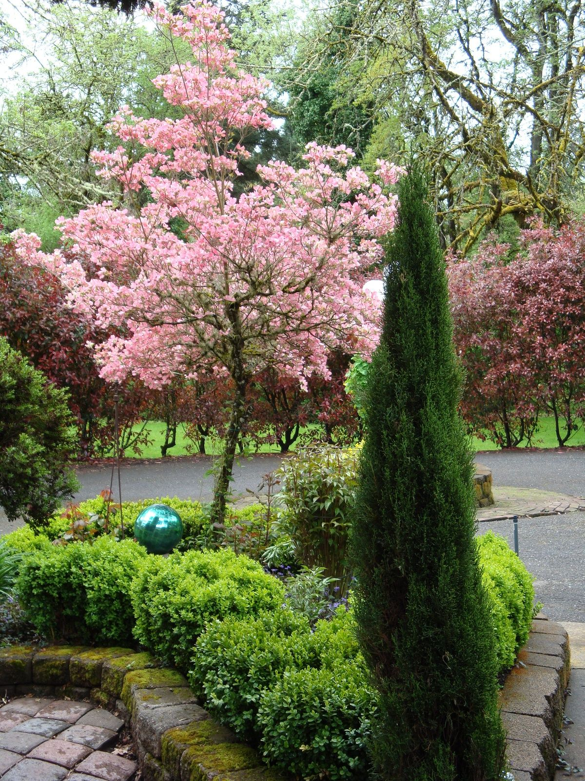 Cherry blossom tree. in the backyard | yard decor | Pinterest ...