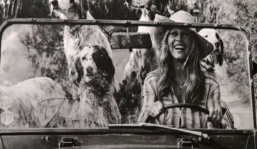 en voiture avec ses chiens brigitte bardot et les animaux pinterest. Black Bedroom Furniture Sets. Home Design Ideas