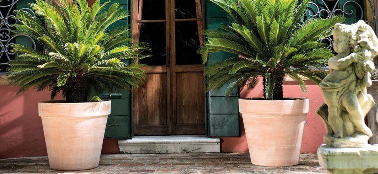 Terracota industrial pots pinterest for Plantas de exterior para macetas