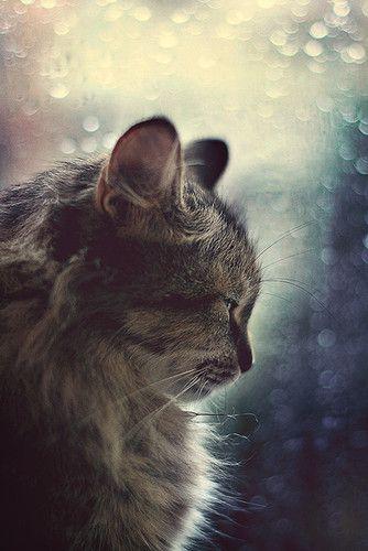 Magicat Cats Beautiful Cats Pretty Cats