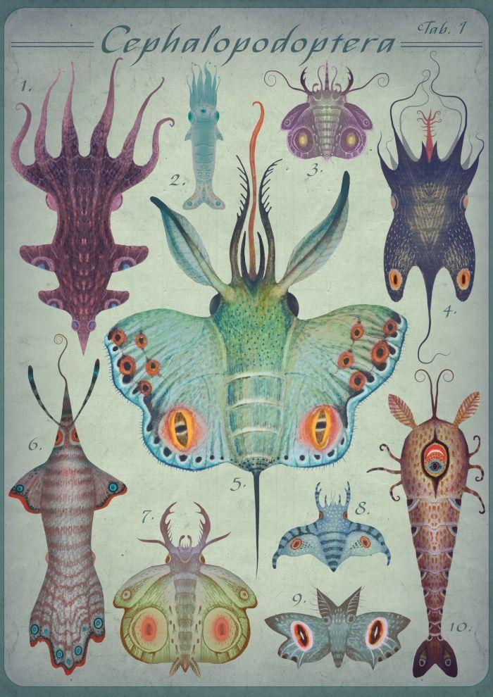 Cephalopodoptera Tab. I Art Print by Vladimir Stankovic