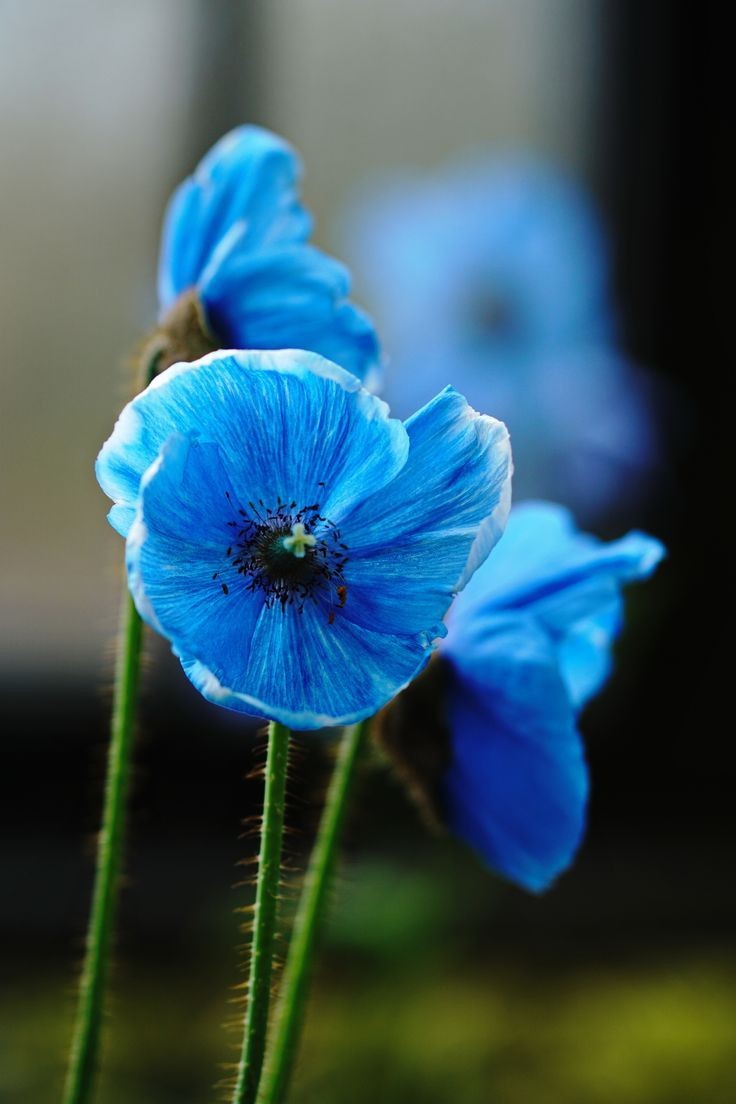 Blue flowers names flowers names flowers blue flowers
