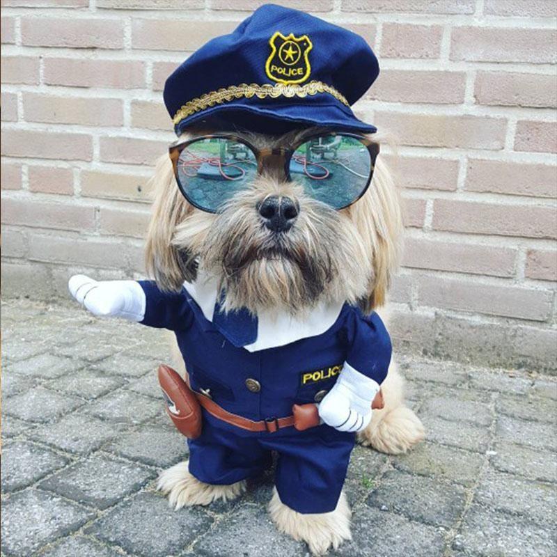 Hysterical Dog Halloween Costume Dog Halloween Costumes Dog