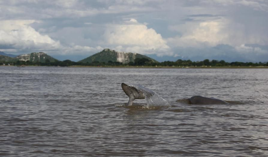 Irrawaddy river and dolphins.