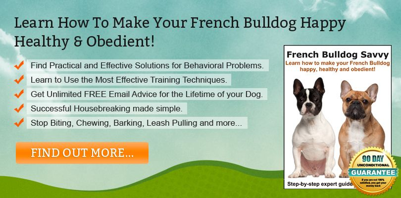 French Bulldog Training Advice And Tutorials German Shorthaired