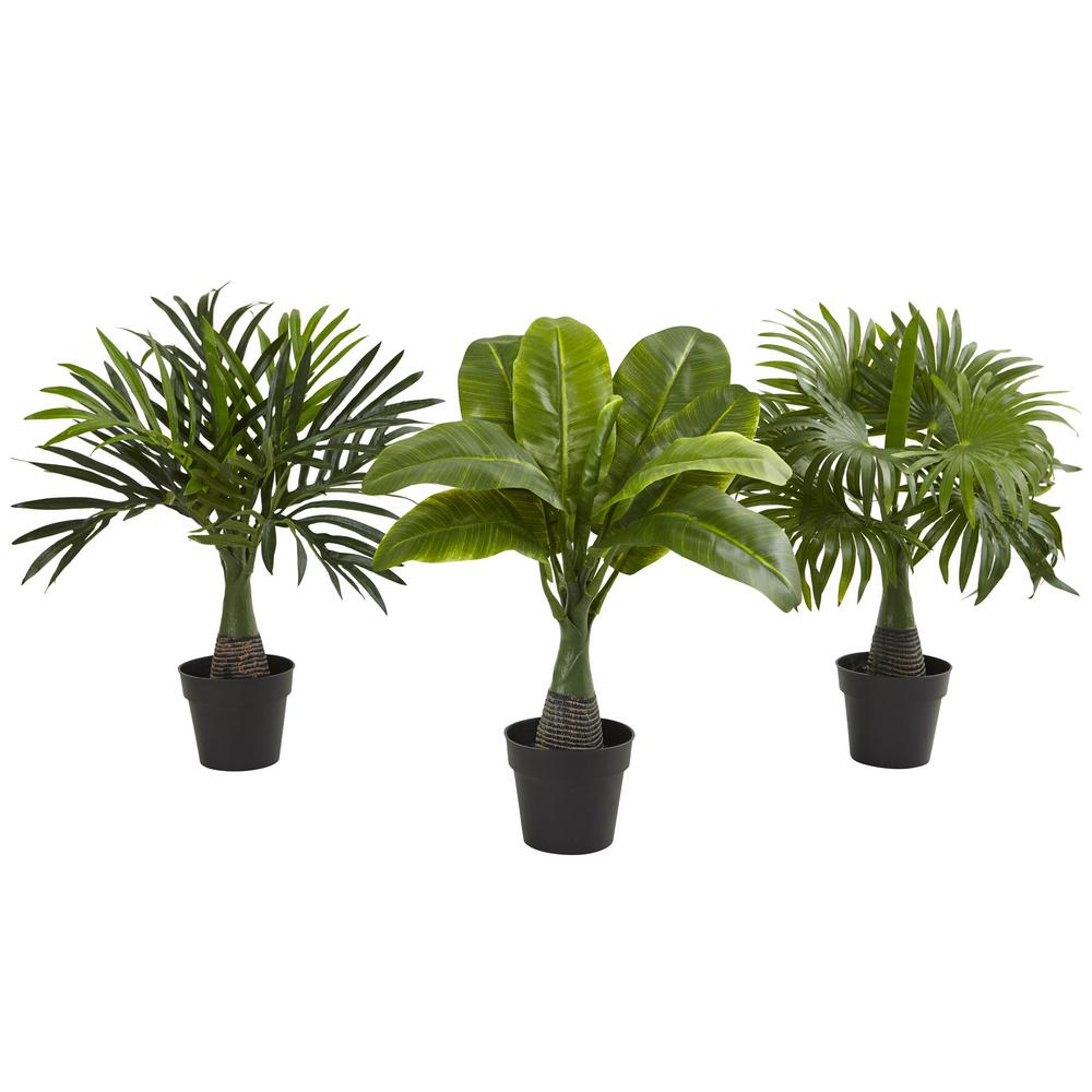 in areca fountain and banana palm set of green palms
