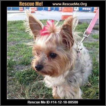 Animal Id 14 114gia Male Yorkie Mix Age Young Adult Compatibility Not Good With Other Dogs Good With Adults Not Kids With Images Yorkie Yorkie Mix Yorkie Poo