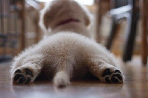 My Favorite Thing About Puppies Are Their Fluffy Butts And