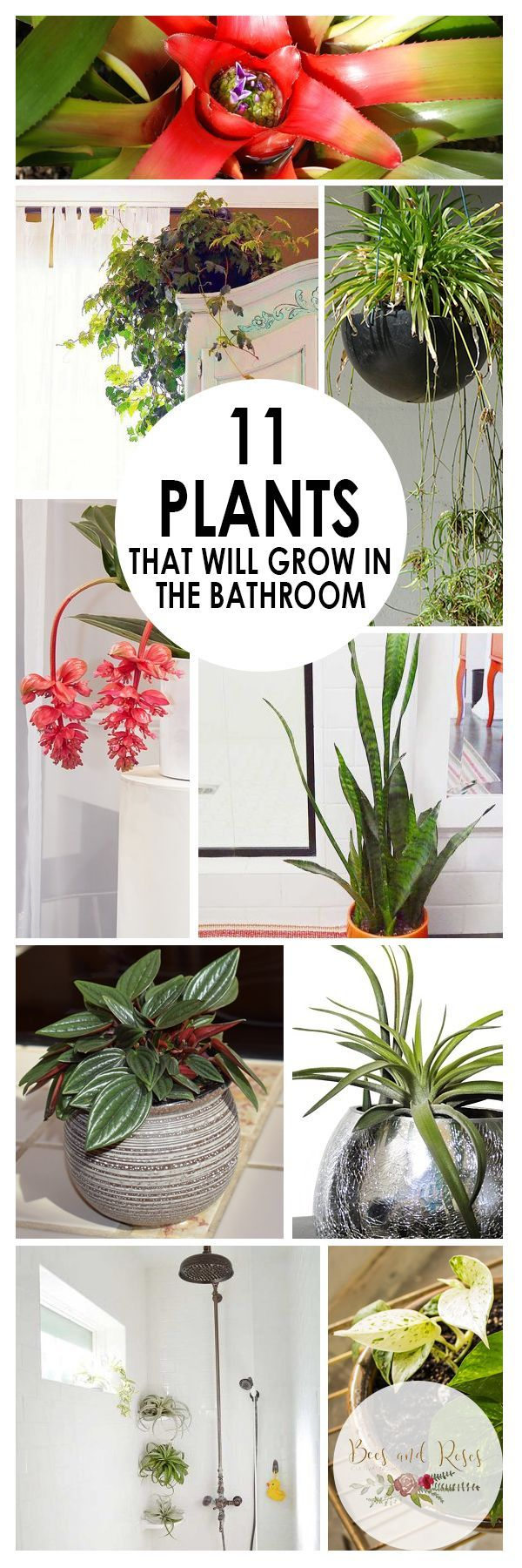 11 easy to grow bathroom plants page 13 of 13 planters bathroom plants plants house. Black Bedroom Furniture Sets. Home Design Ideas