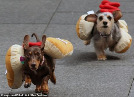These Little Legged Hot Dogs Are Racing To Win The Running Of The