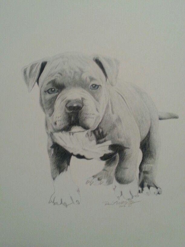 Baby Pitbull Drawing By Reco Washington Dog Drawing Dog Art